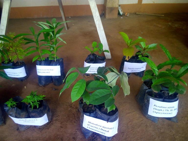 plante_medicinale_domestiquee